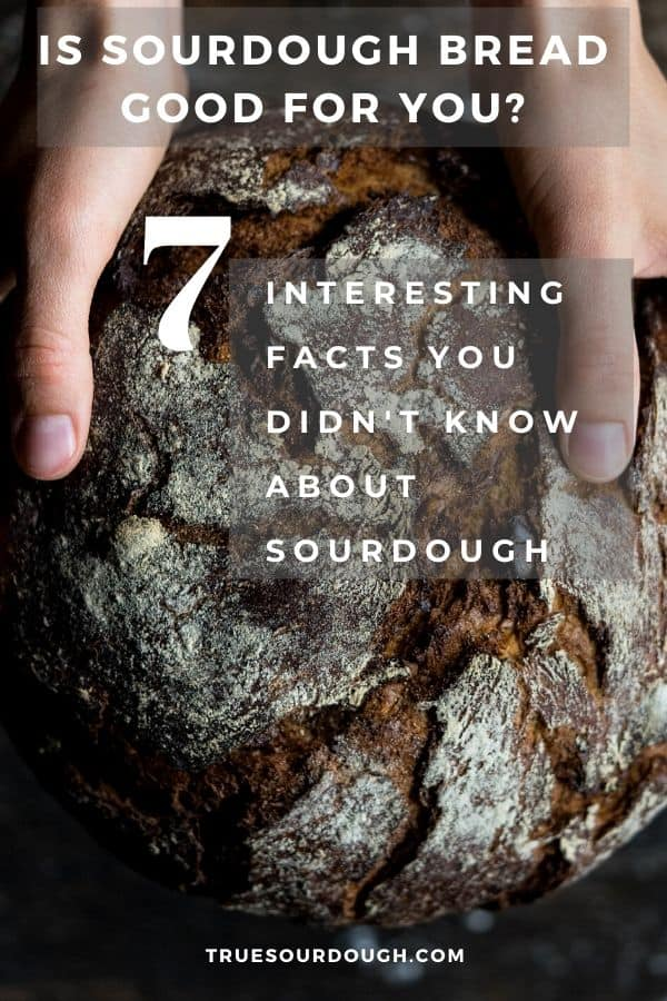 Is Sourdough Bread Good for you? 7 Things You Need to Know